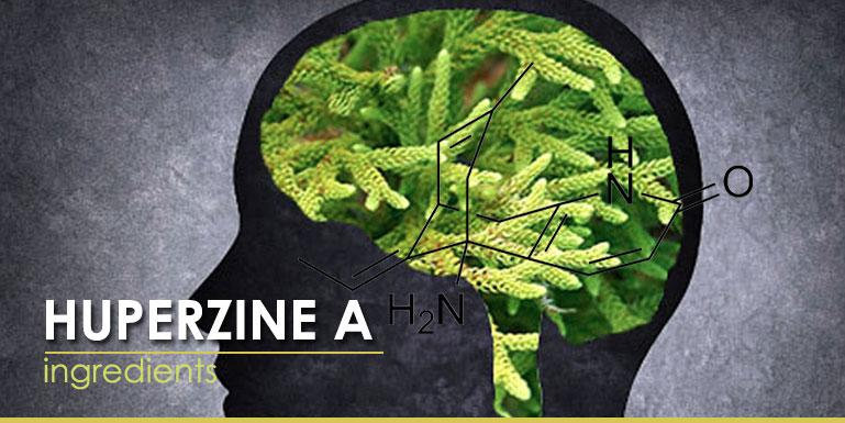 Huperzine A ingredients